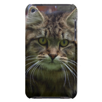 Maine Coon Tabby Cat Pet-lovers Phone Case