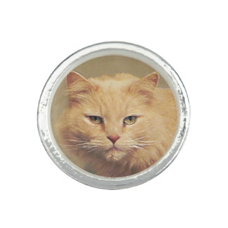 Maine Coon Tomcat Rings
