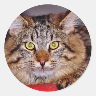 Maine-Coone Cat Round Stickers
