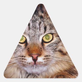 Maine-Coone Cat Triangle Sticker