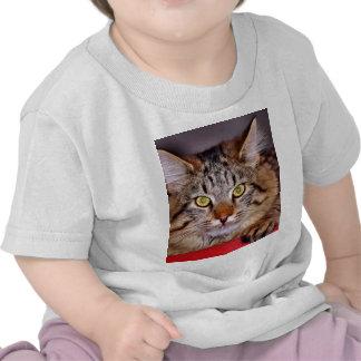 Maine-Coone Cat Tee Shirt