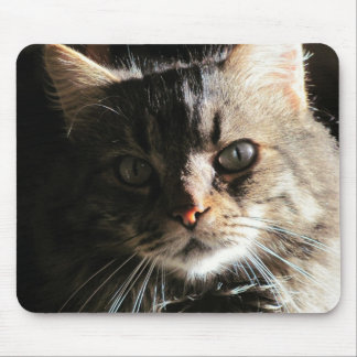Maine Coon's Face Mouse Pad