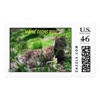 MAINE COONS RULE! POSTAGE