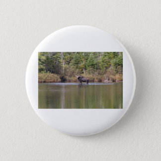 Maine Cow Moose Pinback Button