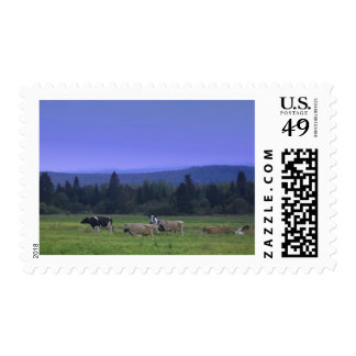 Maine Cows Stamps