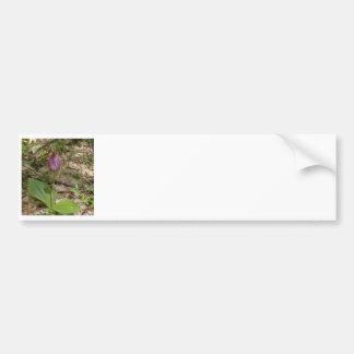 Maine Lady Slipper Orchids in Wells Maine - photo Bumper Sticker