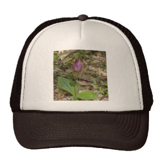 Maine Lady Slipper Orchids in Wells Maine - photo Trucker Hat