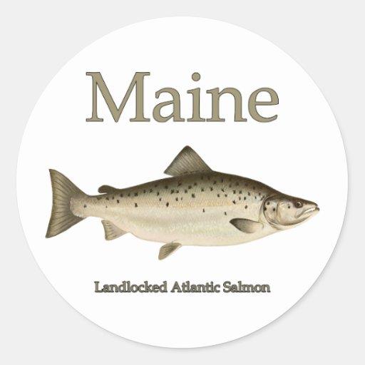 Maine landlocked salmon classic round sticker zazzle for Maine salmon fishing