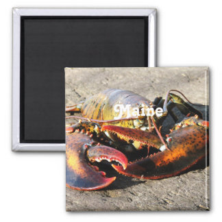 Maine Lobster 2 Inch Square Magnet