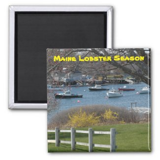 Maine Lobster Boats Magnet