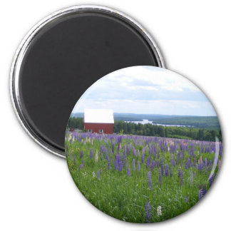 Maine Lupines Field Stockholm, ME 2 Inch Round Magnet