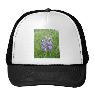 Maine Lupines Field Stockholm, ME Trucker Hat