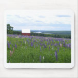 Maine Lupines Field Stockholm, ME Mousepads