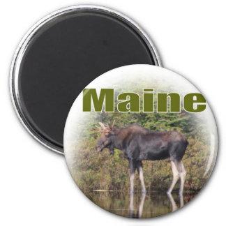 Maine Moose Magnet