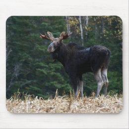 Maine Moose Yearling mousepad