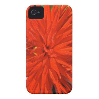 Maine Mum Brilliant Red Flower Case-Mate iPhone 4 Cases