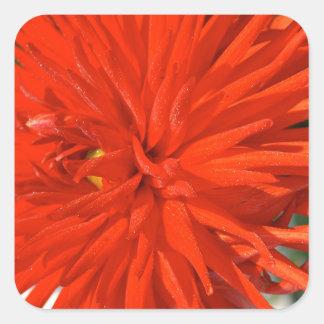 Maine Mum Brilliant Red Flower Square Sticker