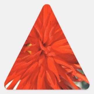 Maine Mum Brilliant Red Flower Triangle Sticker