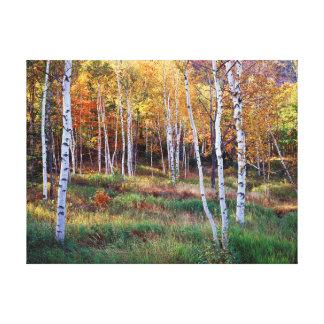 Maine, parque nacional del Acadia, otoño Lona Envuelta Para Galerias