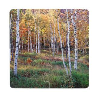 Maine, parque nacional del Acadia, otoño Posavasos De Puzzle