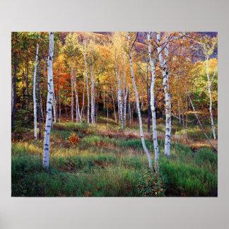 Maine, parque nacional del Acadia, otoño Póster