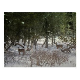 Maine septentrional 38 postales