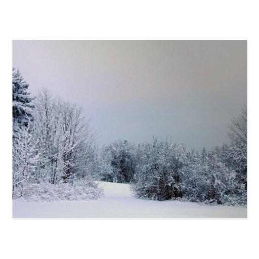 Maine Snow Country Postcard