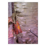 Maine Spring Greeting Cards