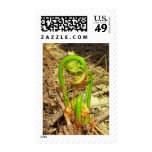 Maine Spring Postage Stamp