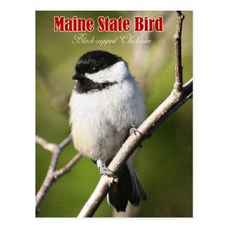 Maine State Bird - Black-capped Chickadee Postcard