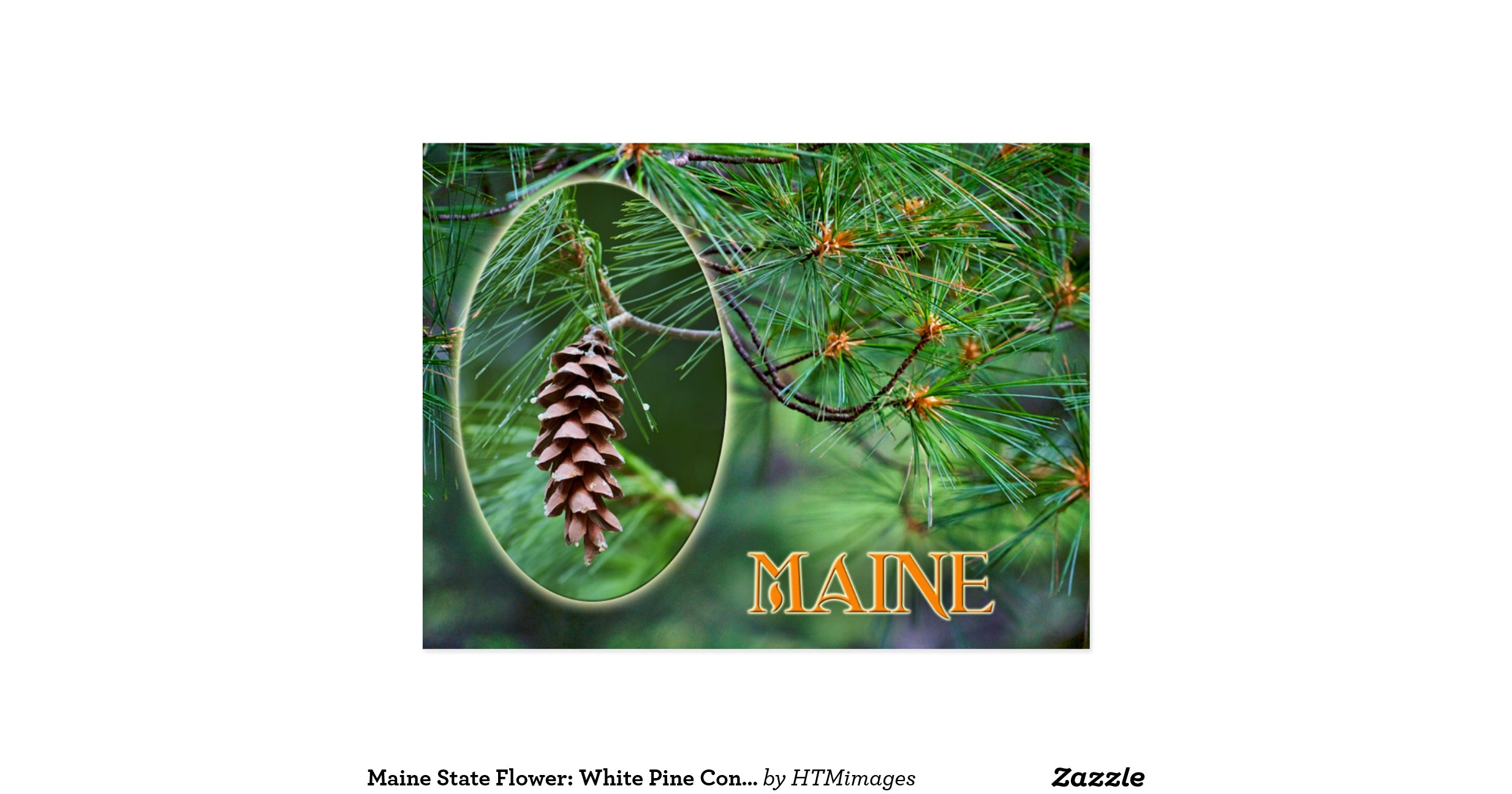 maine state flower white pine cone and tassel postcard r8ed a64dc698a52