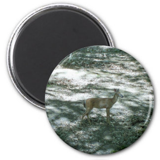 Maine Whitetail Magnet
