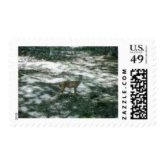 Maine Whitetail Stamp