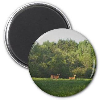 Maine Whitetails 2 Inch Round Magnet