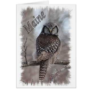 Maine Wildlife - Northern Hawk Owl Card