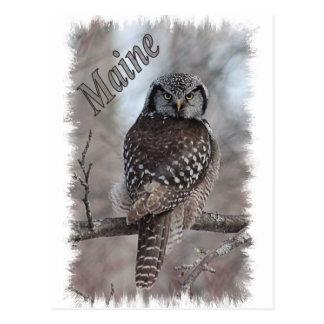Maine Wildlife - Northern Hawk Owl Postcard