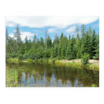 Maine Woodlands Postcard