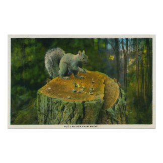 MaineA Little Nutcracker Squirrel from Maine Poster
