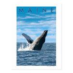 MaineHumpback Whale Scene Post Card