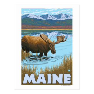 MaineMoose Drinking in Lake Post Card