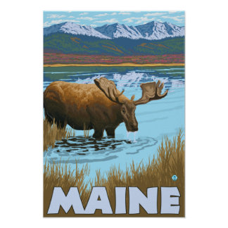 MaineMoose Drinking in Lake Poster