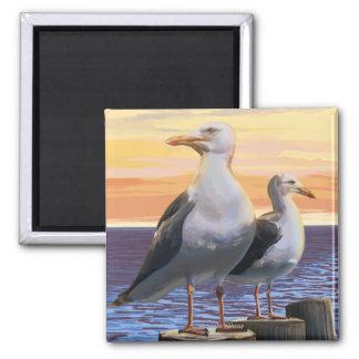 MaineSea Gulls Scene Magnet