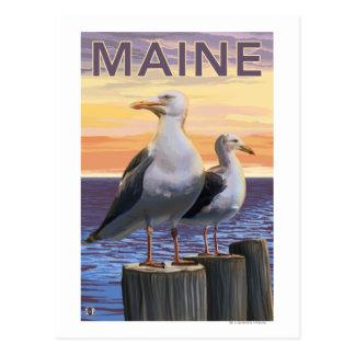 MaineSea Gulls Scene Postcard