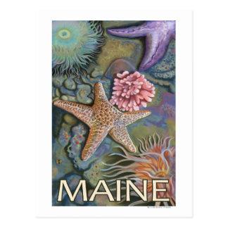 MaineTidepool Scene Postcard