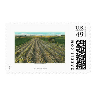 MaineView of a Potato Farm in Maine Postage