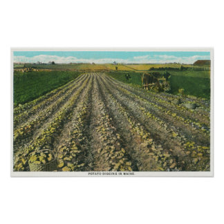 MaineView of a Potato Farm in Maine Poster