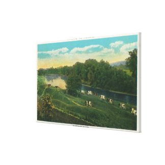 MaineView of Cows Homeward Bound Stretched Canvas Prints