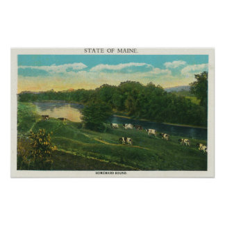 MaineView of Cows Homeward Bound Poster