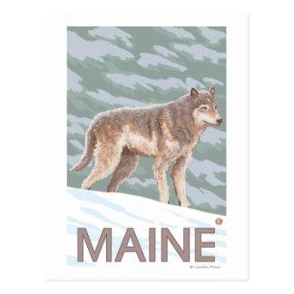 MaineWolf Scene Postcard