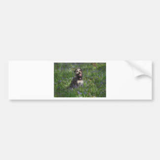 Maisie Bumper Sticker